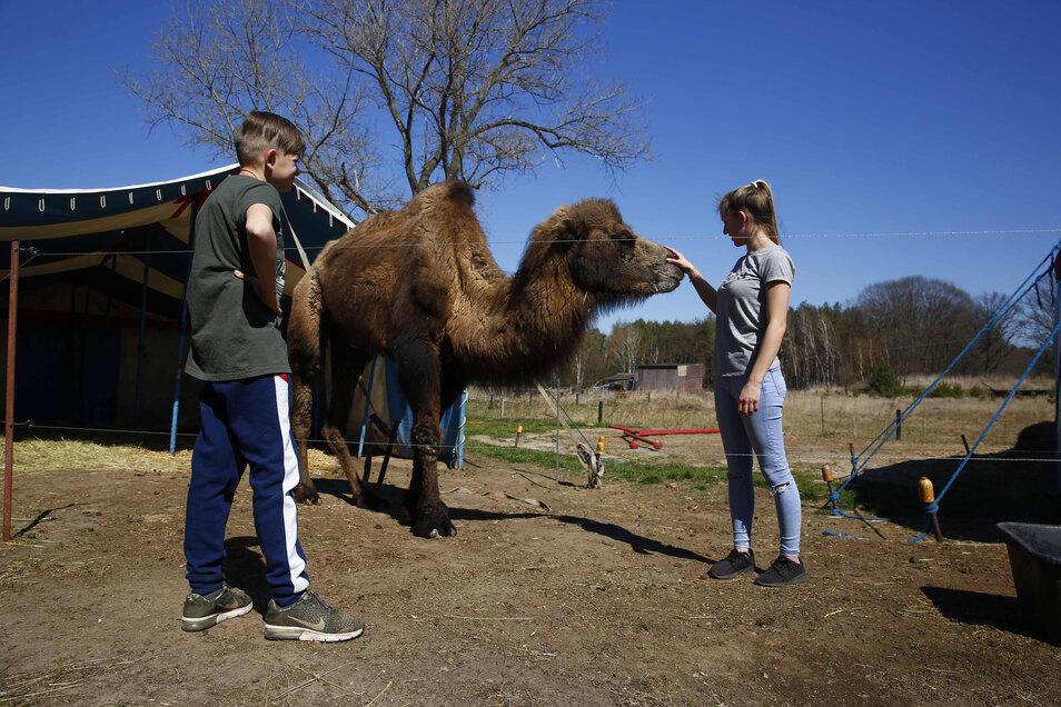 Kamel Sambo gesundheitliche Probleme. Die Zirkusleute müssen mit ihm nach Leipzig in die Tierklinik.