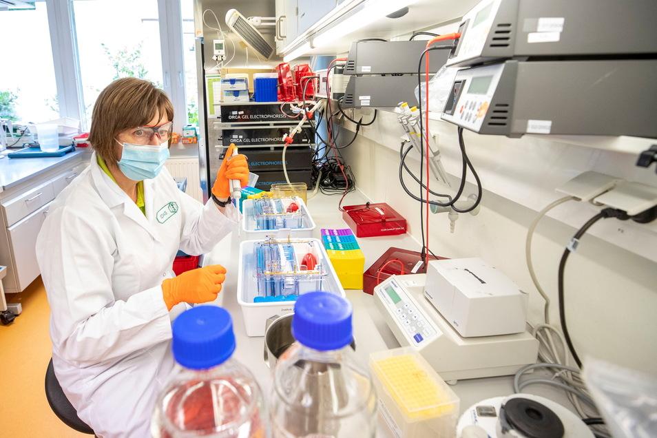 Wieder im Alltag angekommen: Simone Reimann im Labor des Instituts für Dopinganalytik und Sportbiochemie in Kreischa bei der Untersuchungsvorbereitung von Urinproben. Das Institut arbeitet im Auftrag der Welt-Anti-Doping-Agentur und analysiert vor allem P