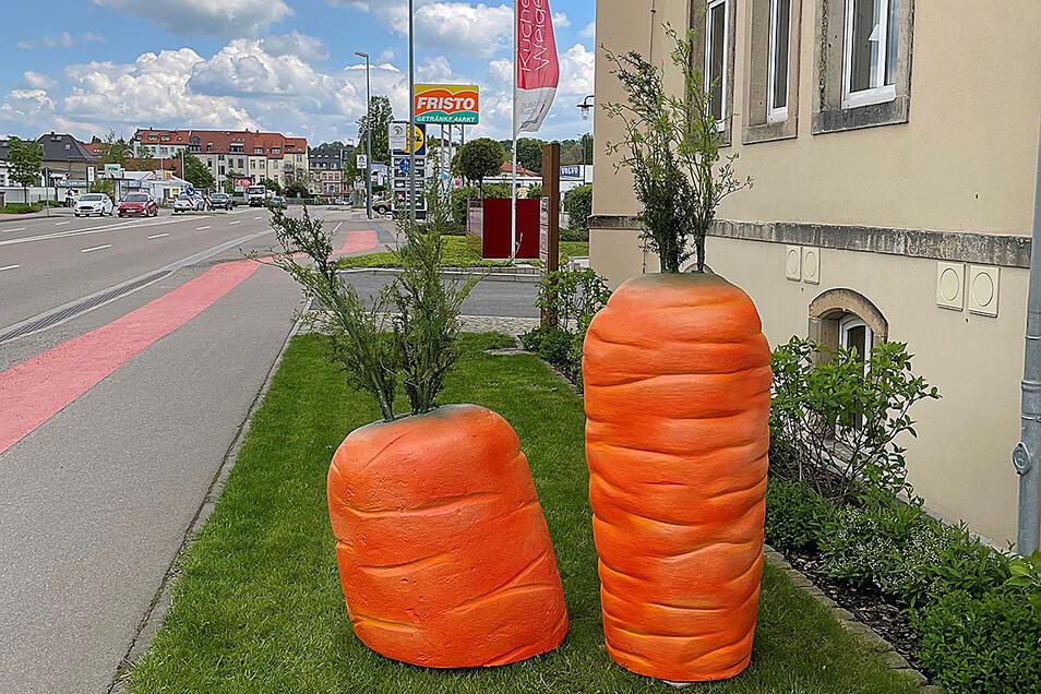 """Jetzt """"wachsen"""" wieder zwei Möhren vor dem Küchenstudio Weigelt in Pirna."""