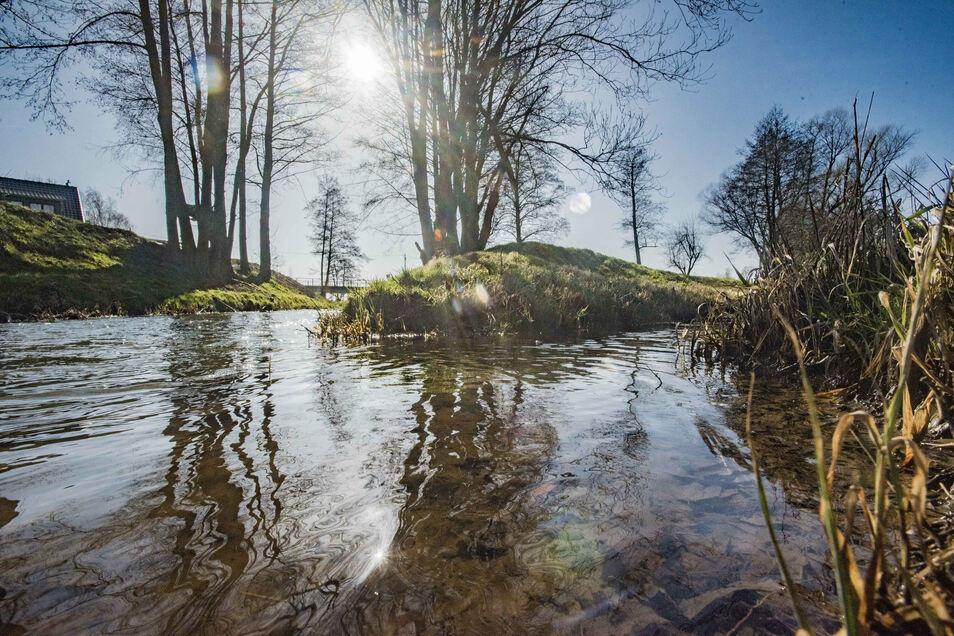 Das Klosterwasser bei Neudörfel. Hier werden jetzt mehrere Bäume und Sträucher gepflanzt.