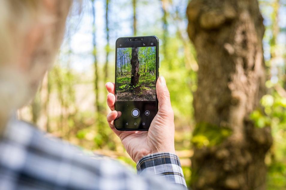 Das Handy kann dabei helfen, Blumen, Bäume, Vögel oder Insekten kennenzulernen.