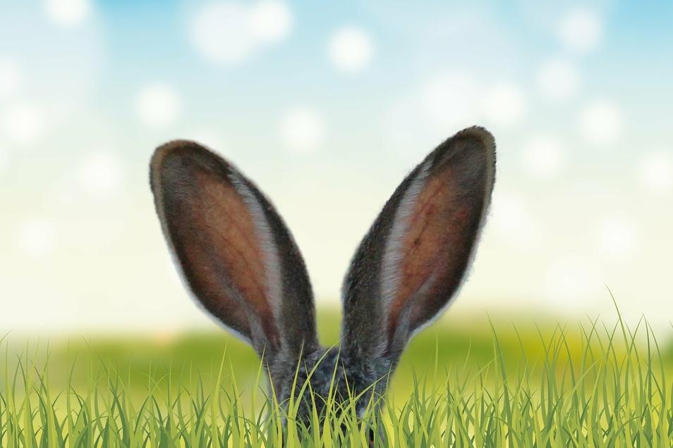 Zu Ostern wird wieder geschlemmt, was das Zeug hält. Was wird denn bei den Meißnern serviert?