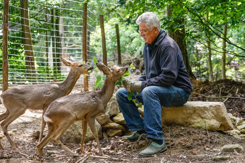 Karl-Heinz John fütter auf dem Butterberg die beiden jungen Rehe Karli und Bambi.