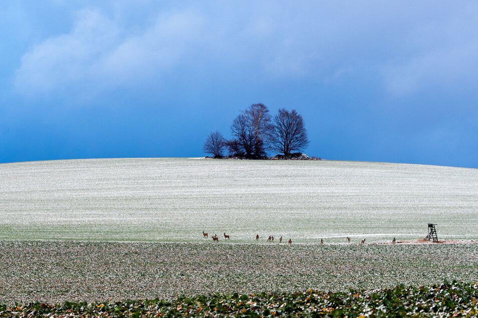 Anfang Februar gab es am Butterberg bei Bischofswerda etwas Schnee.