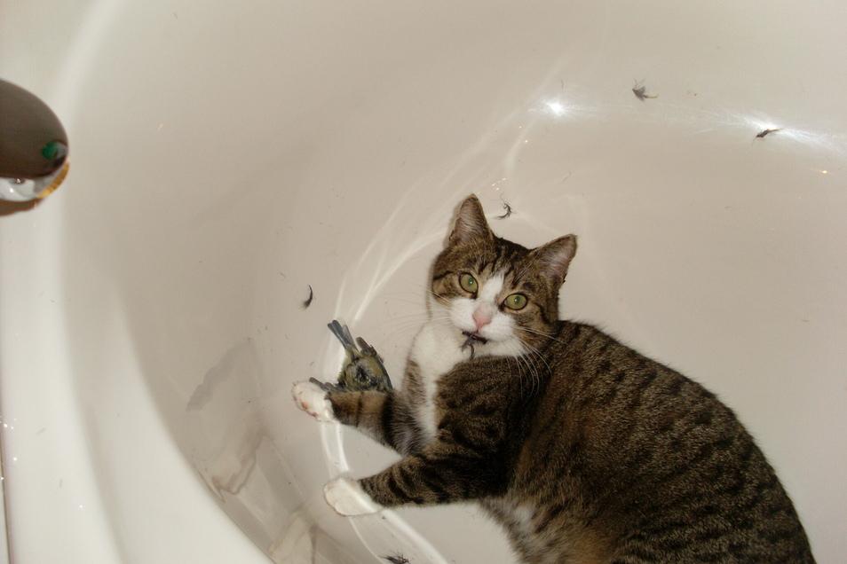 ...im anderen Moment muss eine arme Blaumeise in der Badewanne daran glauben.