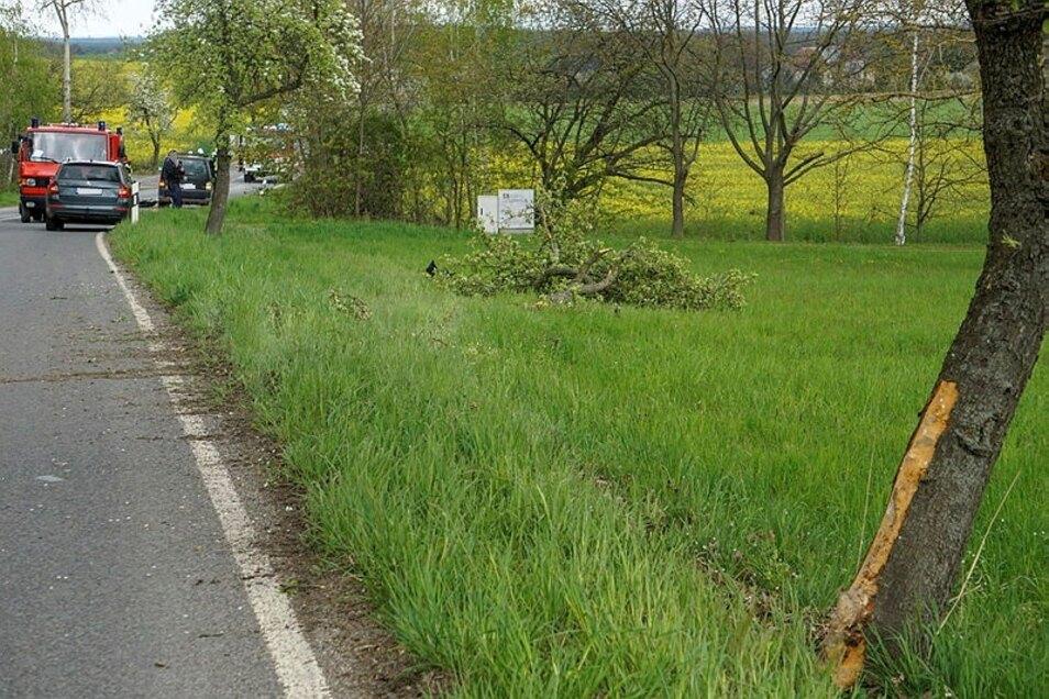 Das Unfallauto streifte einen Baum und fällte dann einen weiteren.