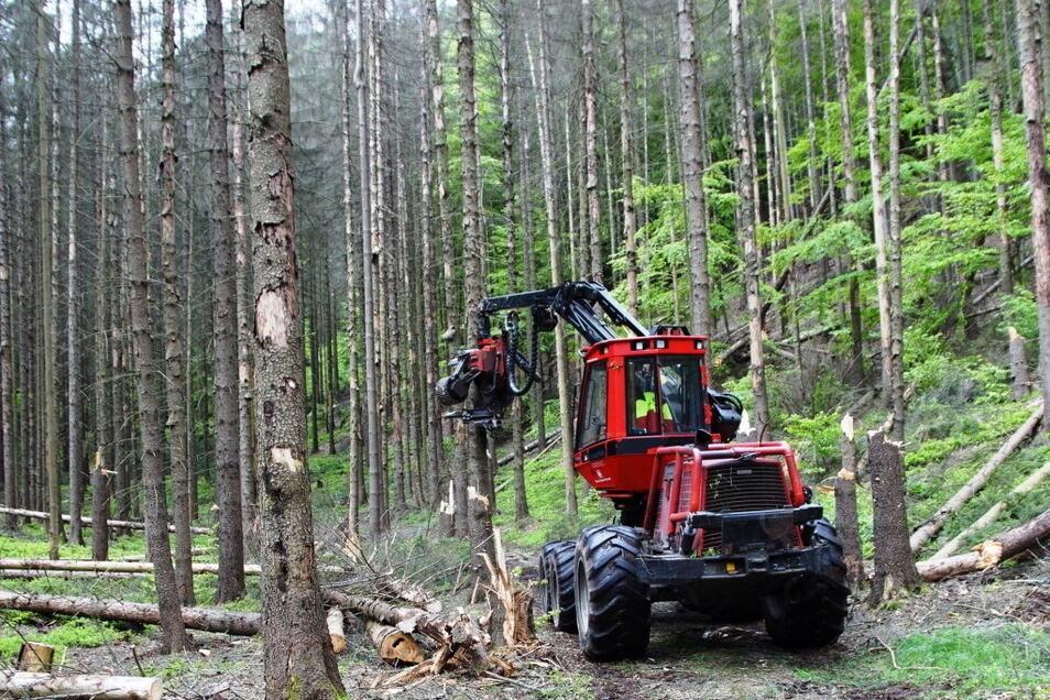 Harvester im Nationalpark: Die schweren Maschinen können nur auf breiten Wegen arbeiten.