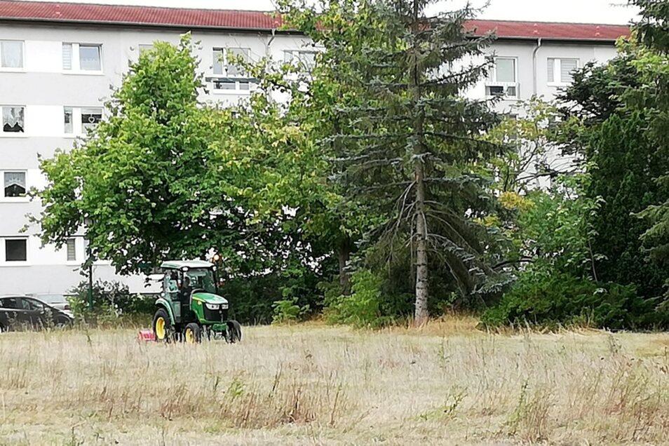 Für die Wohnungsgesellschaft Hoyerswerda handelt es sich um eine Ödlandfläche. Bernd Sauer bezeichnet sie als Bienenwiese. Zu Beginn dieser Woche wurde sie maschinell bearbeitet. Bernd Sauer spricht von Zerstörung eines Biotops, die Wohnungsgesellschaft v