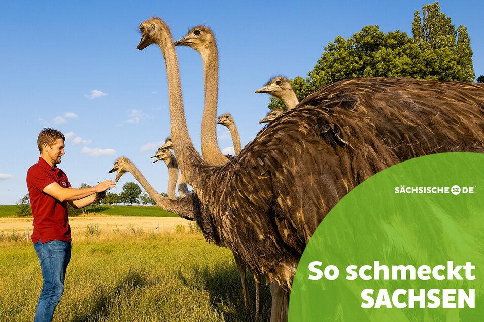 Um die größten Vögel der Welt dreht sich alles auf dem Striegistaler Straußenhof in Pappendorf. Marcus Reißig führt den Hof mit seinem Vater.
