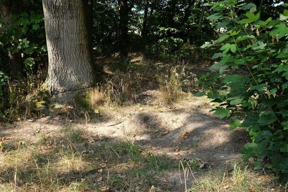 """Viele Jahrzehnte lang stand die alte Bank, die viele Einwohner unter dem Namen """"Preuskers Ruh"""" kennen, am Panoramaweg zwischen Kreischa und Hermsdorf am Wilisch. Womöglich wurde ein Teil des Gestells gestohlen."""