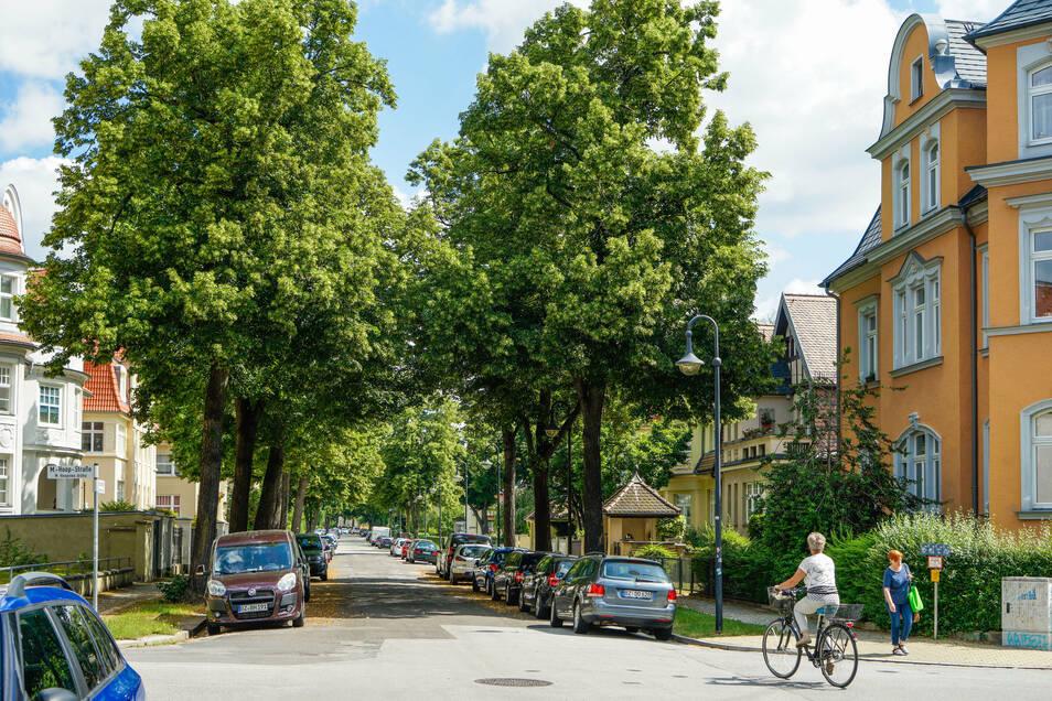 Die alten Linden an der Paulistraße in Bautzen müssen bleiben. Das fordern die Anwohner.