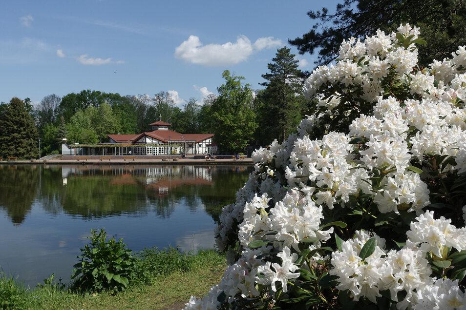 Der Bürgergarten mit Gaststätte. Zu jeder Jahreszeit soll die Parkanlage einen Anziehungspunkt bieten. Gerade ist der Rhododendron in voller Blüte.