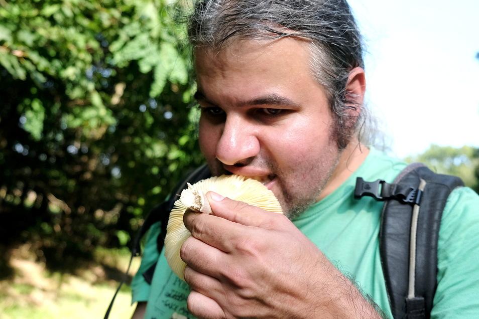 Im Zweifel muss der Mykologe einen zaghaften Biss nehmen, um den Pilz zu identifizieren.