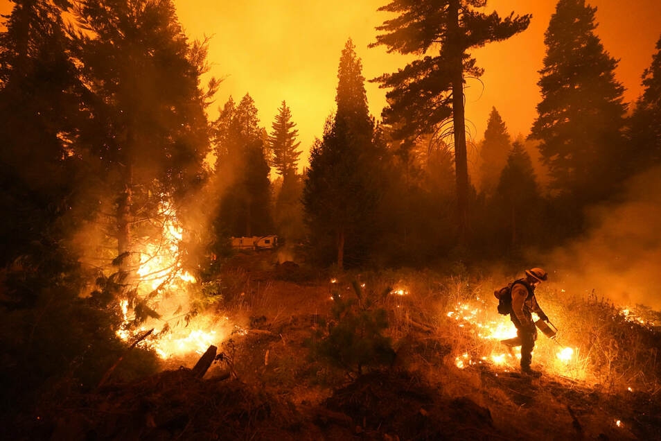 In Sachsen gab es 2020 weniger Waldbrände - trotzdem wurden fast 33 Hektar Forst vernichtet.