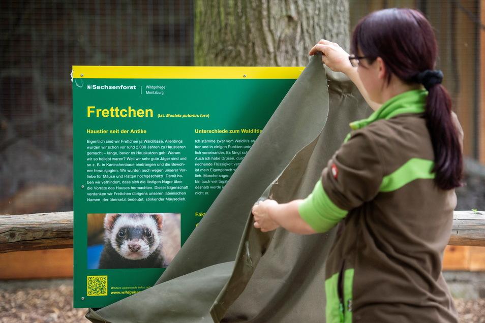 Mit dem Einzug der beiden Frettchen Laura und Leo nahm Tierpflegerin Sandra Kühnel auch das Tuch von der bisher abgedeckten Informationstafel am Gehege.