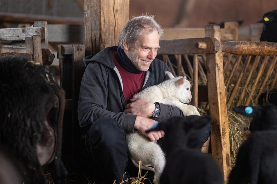 Weiße Lämmer sind eigentlich gar nicht typisch für Falk Bräuers schwarze Schafherde. Doch dieses hier wollte unbedingt mit aufs Bild.