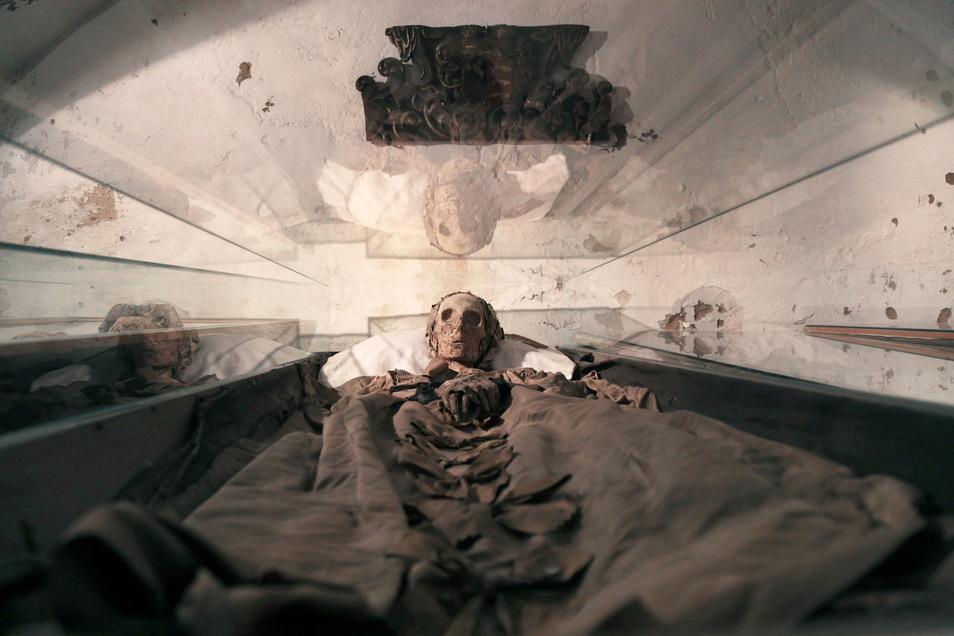 Eine der Mumien in der Gruft der Klosterkirche in Riesa. Ab Ende August wird es wieder geführte Rundgänge durch Kirche und Gruft geben.