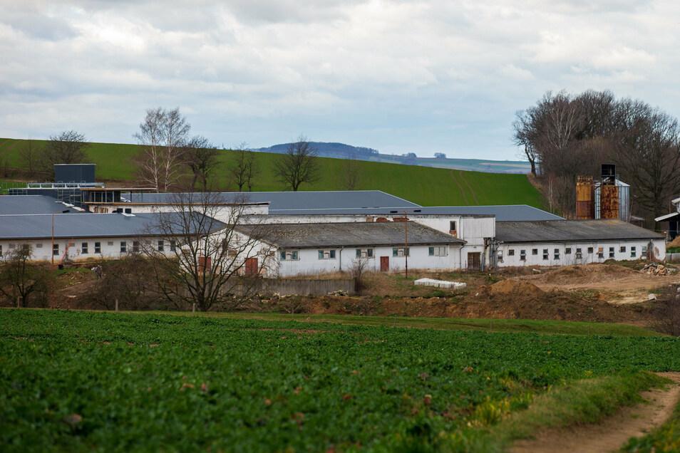Die Schweinemastanlage in Langenwolmsdorf bei Stolpen.
