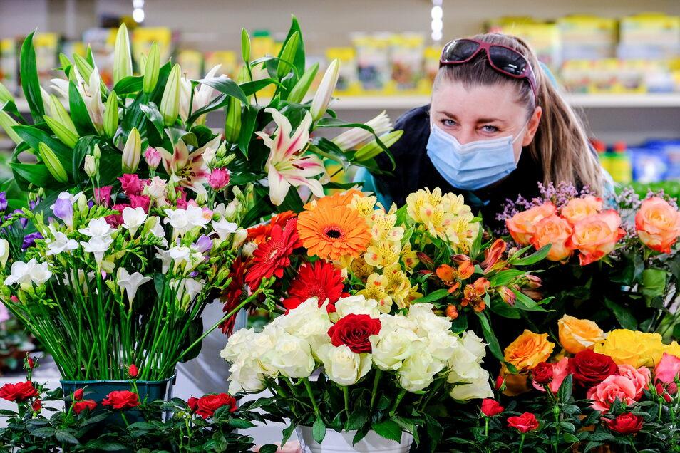 Floristin Beatrice Wagner bindet im Großmarkt der Sächsischen Jungpflanzen Genossenschaft nach Kundenwunsch Blumensträuße. Dafür steht ihr eine bunte Auswahl an Schnittblumen zur Verfügung.