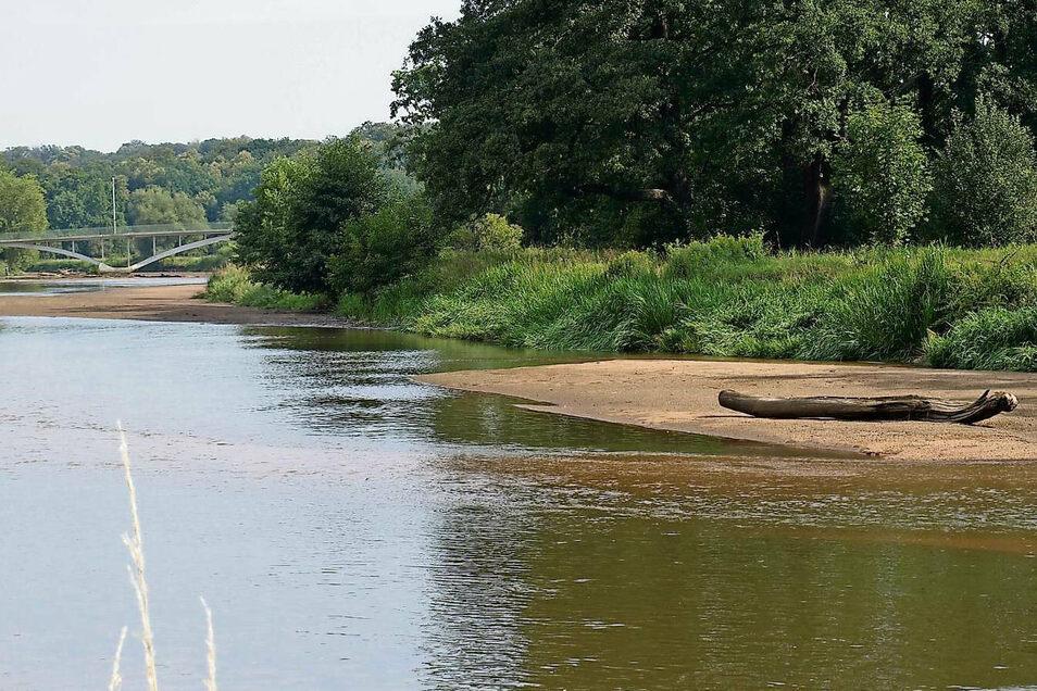 So präsentieret sich noch kürzlich die Neiße in Bad Muskau zwischen Radbrücke und Grenzbrücke: kaum Wasser, überall Sandbänke. Ein fast trockener Fluss.