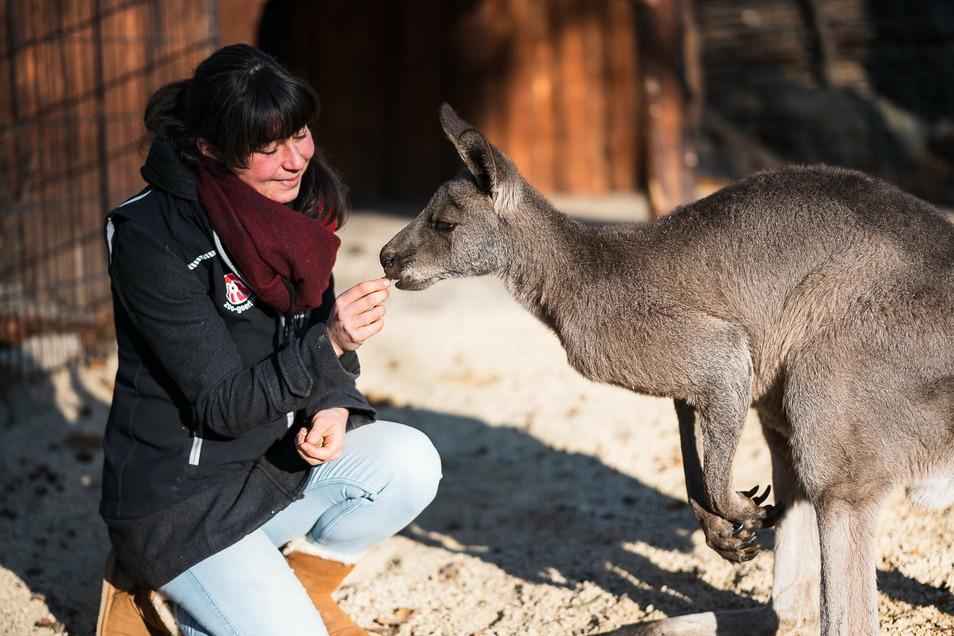 Tierparkpädagogin Isa Plath beim Füttern der Kängurus im Tierpark: Die Tiere haben ein beheiztes Zuhause, der Strom kostet.