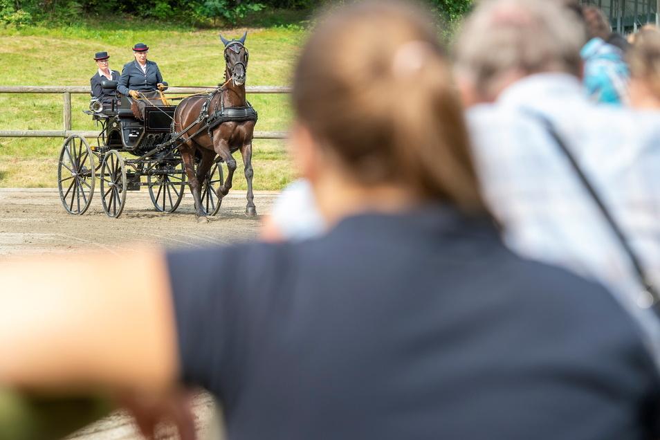 Die Moritzburger Championatstage lockten bereits ab Donnerstag zahlreiche Pferdefreunde aus nah und fern in die Gemeinde. Diese bekamen nicht nur schöne Pferde zu sehen, sondern auch fahrerisches Können präsentiert.