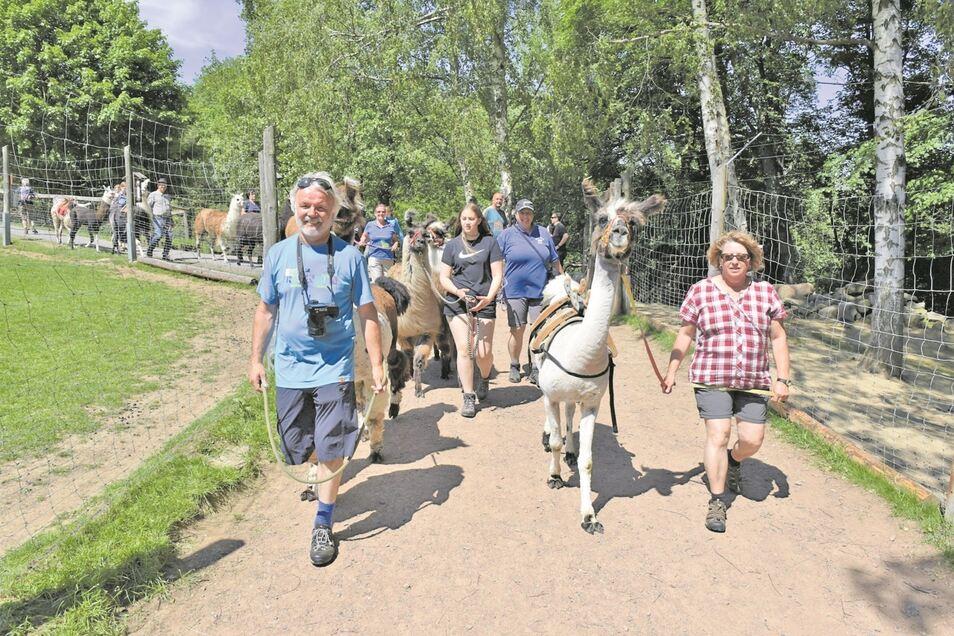 Auf Wanderung mit Lamas von Zinnwald nach Geising in den Wildpark. Beide Orte verbindet jetzt noch mehr.