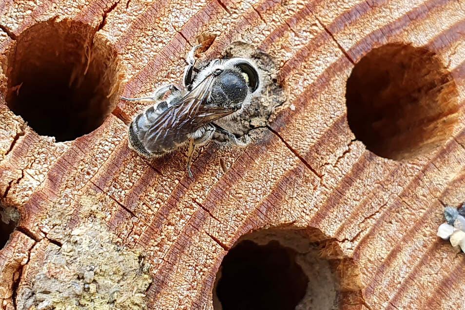 Diese Hotels für Wildbienen sind ein Ersatz für verwilderte, ursprüngliche Natur.