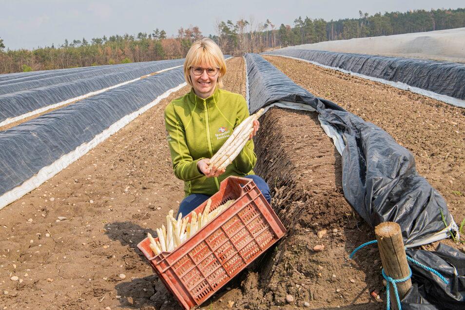 Jedes Jahr, aber nicht immer zu selben Zeit: Elizabeth Schöne vom Spargelhof Ponickau mit dem ersten gestochenen Gemüse der neuen Saison. Aufgrund des Wetters verschob sich die Ernte ein wenig.
