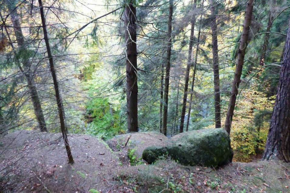 An den steilen Hängen entlang der Kirnitzschtalstraße müssen abgestorbene Fichten gefällt werden.