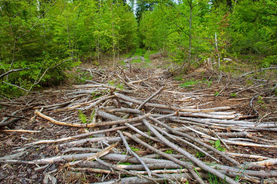 Eine Rückegasse im Tharandter Wald: Wer sich an den Weg gewöhnt hat, den stört es, wenn plötzlich Geäst herumliegt. In der Regel wird es nicht beräumt, sagt der Forst.