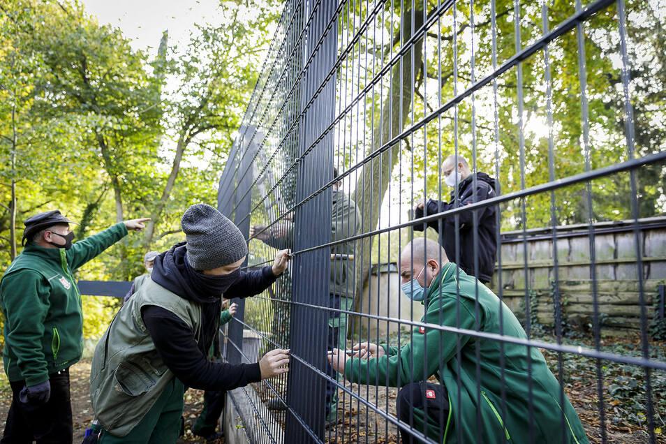 Da gehts lang: Tierparkchef Sven Hammer (li.) zeigt, wo die letzte Schraube angebracht werden muss. Am Donnerstag wurde das Zaun-Bauwerk fertig.