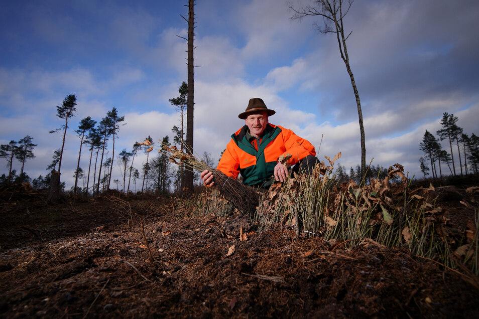 Die Heide braucht neue Bäume, Heiko Müller setzt vor allem auf Eichen, deren Setzlinge er in der Hand hält.