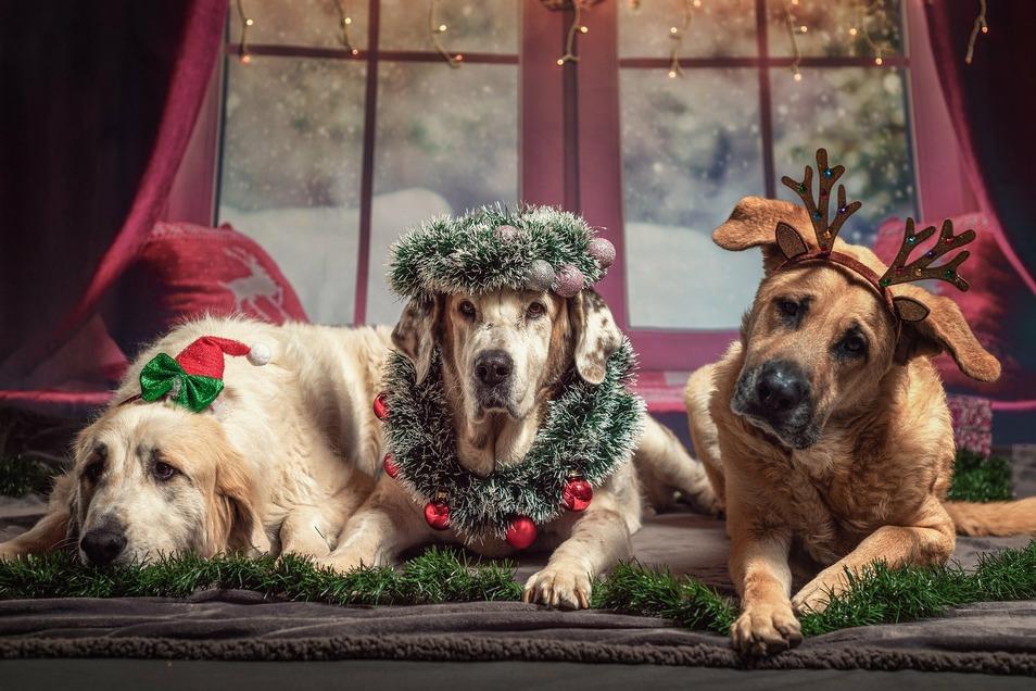 Weihnachten ist für Viele die schönste Zeit des Jahres. Doch mal kurz aufregen, kann man sich doch trotzdem.