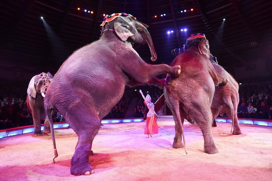 Eine Dompteurin tritt mit Elefanten im Circus Krone in München auf.