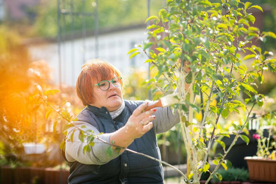 Der Herbst malt die Blätter an – und die Dresdner Gartenfachberaterin Katrin Keiner ihre Bäume.