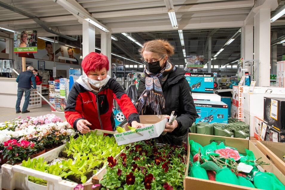 Beratung und Einkaufen im Landmaxx-Baumarkt in Coswig - das geht ab sofort wieder für jedermann, nicht nur für Gewerbetreibende.