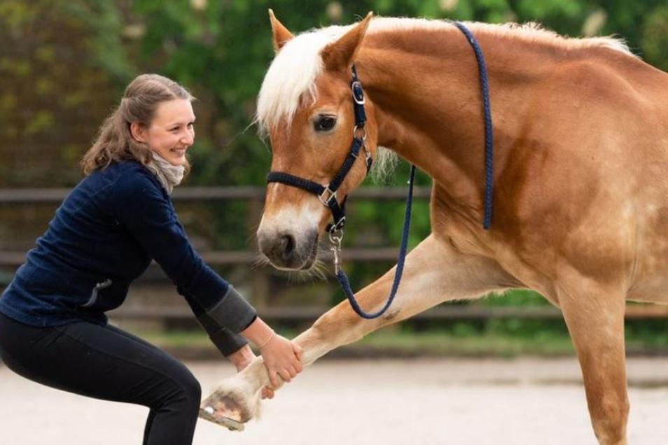 Sanft bewegt Melanie Bruck die Beine des Pferdes, um so vor allem die Gelenke beweglich zu halten. Ihr ist es wichtig, dass das Tier Vertrauen zu ihr findet.