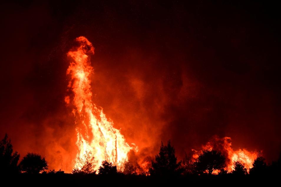 Flammen verbrennen einen Wald in der Nähe des Dorfes Galatsona auf der Insel griechischen Insel Euböa.