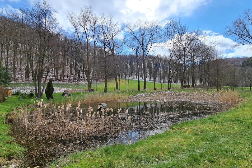 Heute hat sich die Natur das ehemalige Freibad zurückgeholt.
