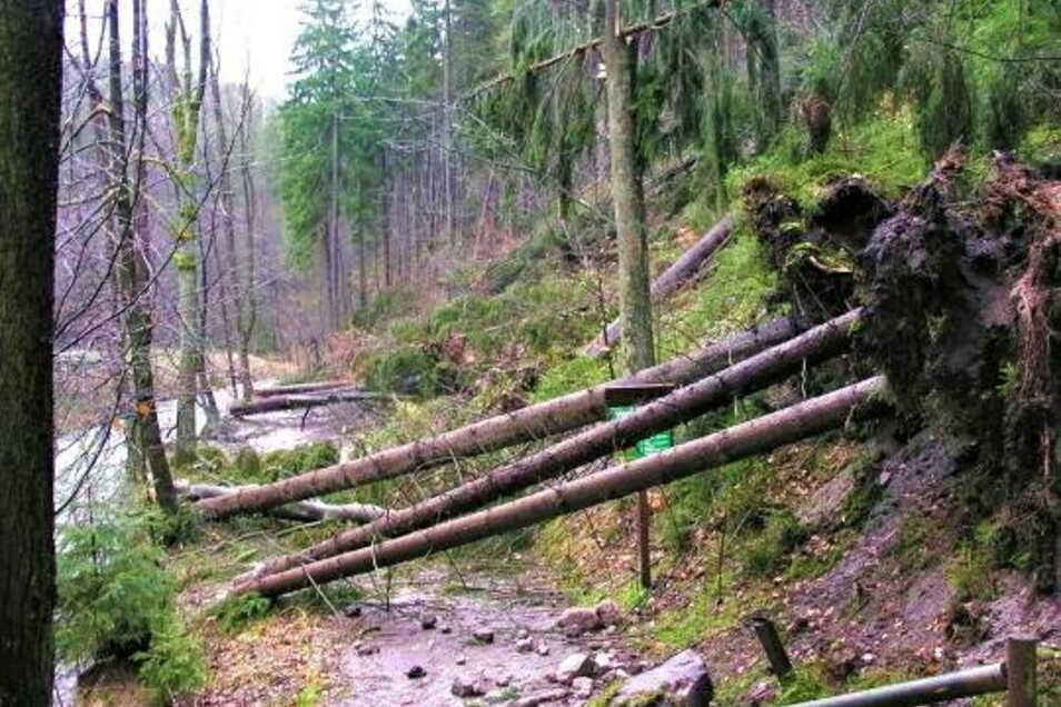 Folgen eines früheren Sturms im Kirnitzschtal in der Sächsischen Schweiz.