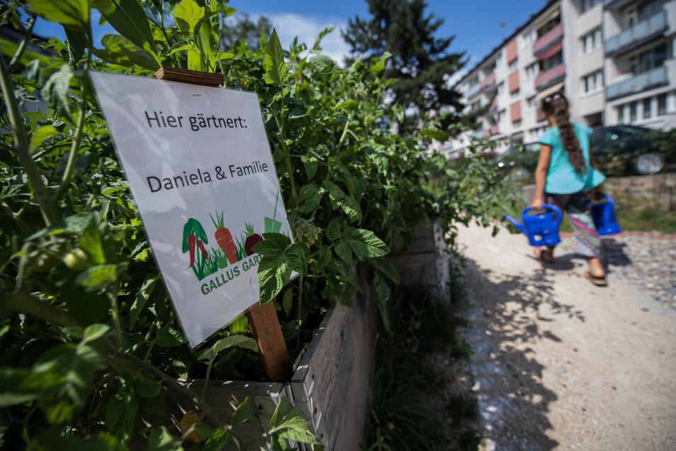 """Beliebtes Urban Gardening wie das Projekt """"Gallup-Garten"""" mitten in Frankfurt/Main soll durch das Waldgärtnern erweitert werden."""