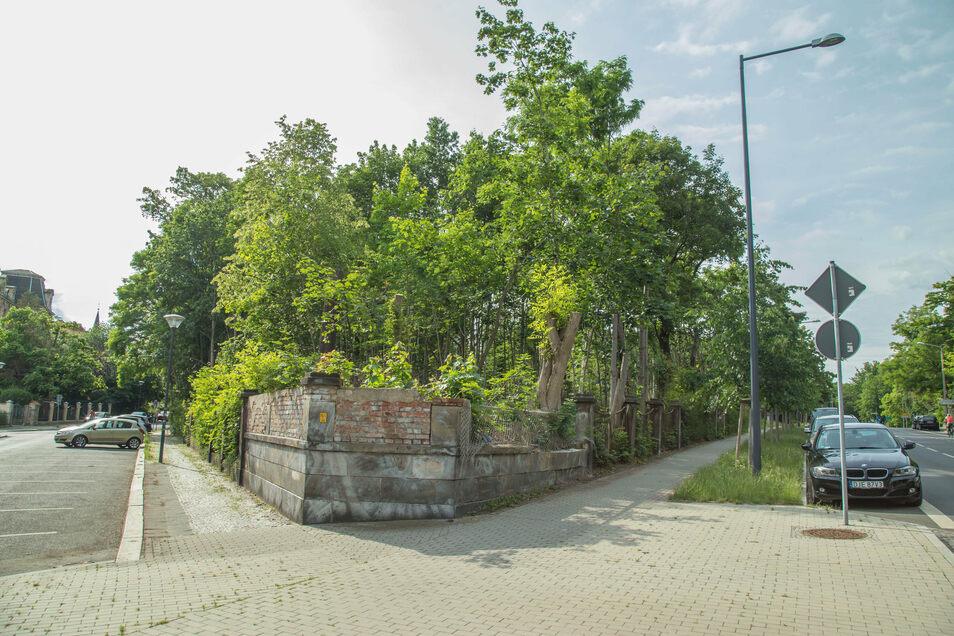 Stehen hier bald drei Mehrfamilienhäuser? Der alte Sportplatz am Görlitzer Mühlweg.