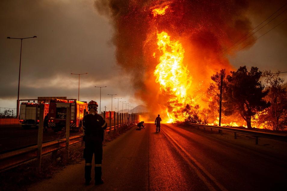 Griechenland, Afidnes: Feuerwehrleute bekämpfen einen Waldbrand etwas nördlich von Athen.