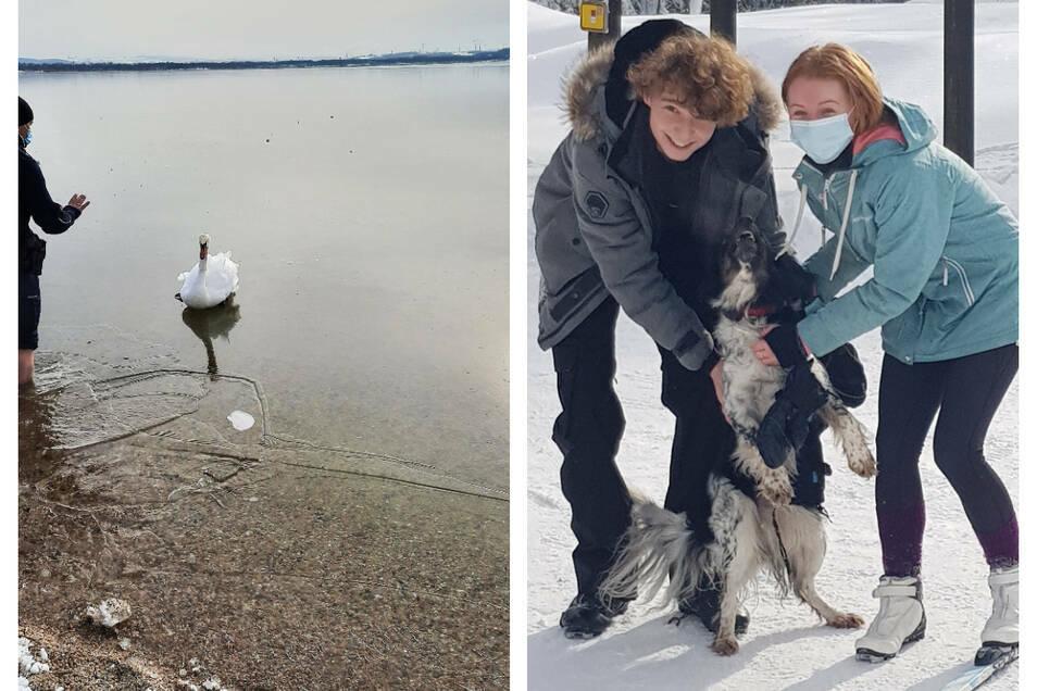 Ein Hund und ein Schwan konnten auf menschliche Hilfe zählen.