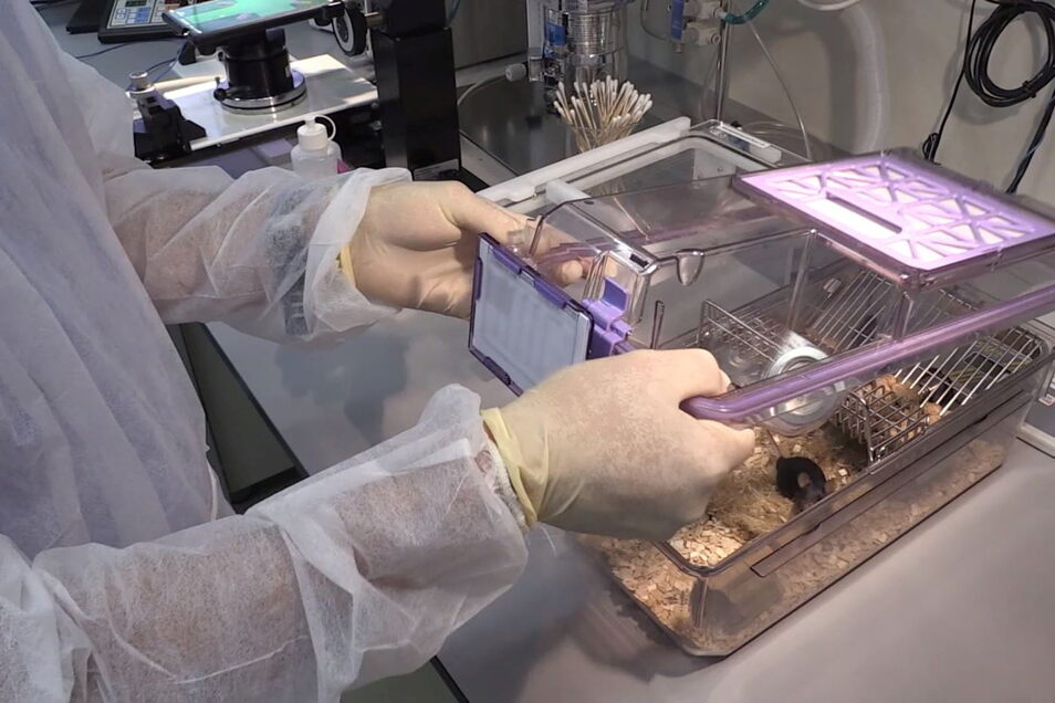 Ein Käfig mit einer Maus in einem Versuchslabor - werden Experimente an Tieren durch Corona künftig unnötig?