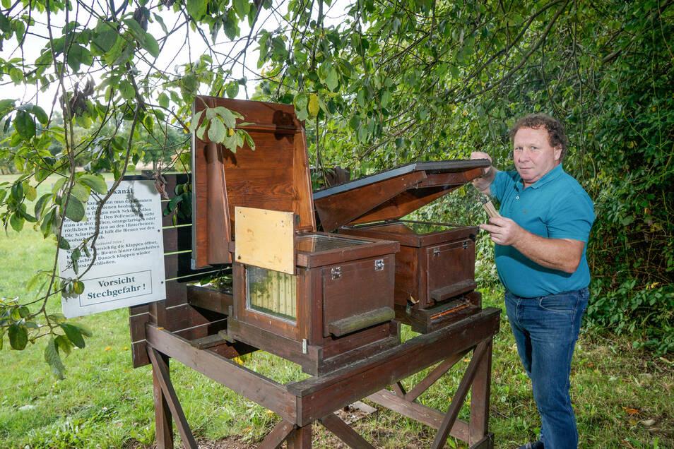 Das Leben und Arbeiten von Bienen kann man an der Oberrammenauer Straße aus nächster Nähe betrachten. Der Schutz und die Pflege von Bienenvölkern ist gelebter Naturschutz, sagt Schaubienenstand-Betreuer Jürgen Platz.