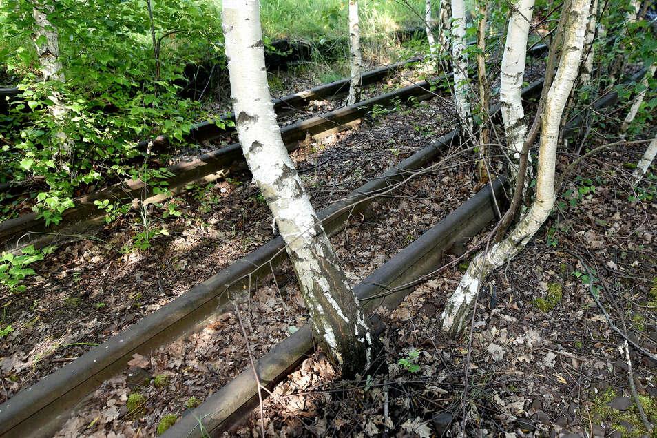 Die Gleise der Herrnhuter Bahn sind nicht nur am Bahnhof Oberoderwitz zugewachsen.