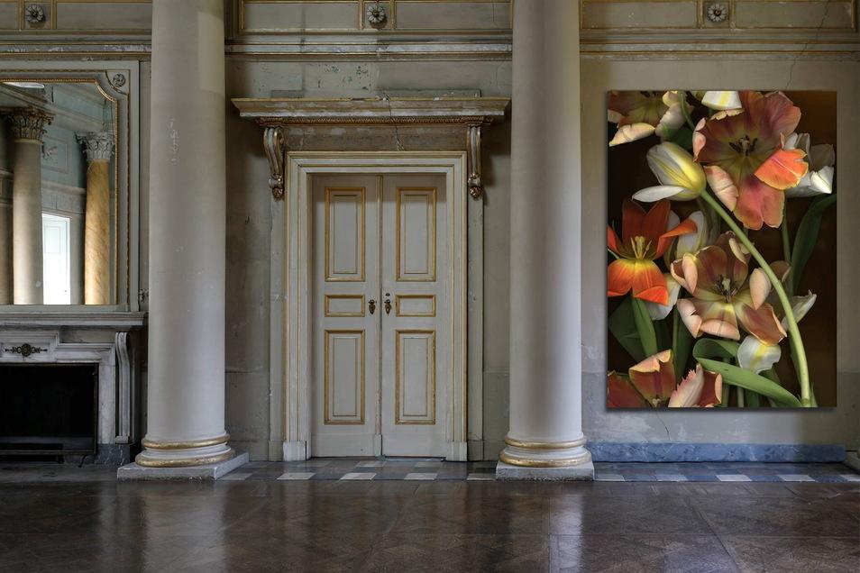 Im Kuppelsaal des Neuen Palais in Pillnitz bezaubern die gigantischen Tulpen-Scans von Luzia Simons.