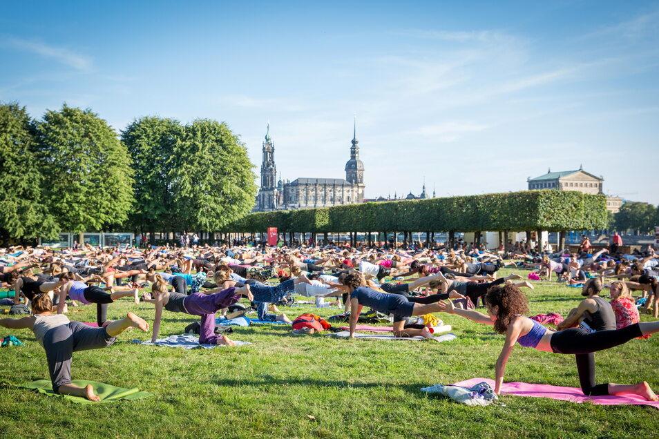 Yoga im Park am Japanischen Palais ist zum absoluten Anziehungspunkt aller geworden, die Seele und Körper an der frischen Luft entspannen wollen.